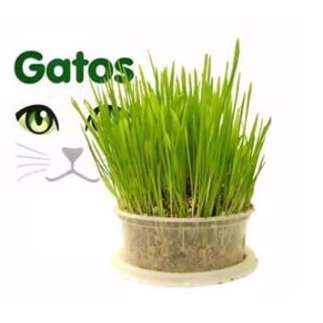 Sementes de graminha para Gatos BioStar 70gr.