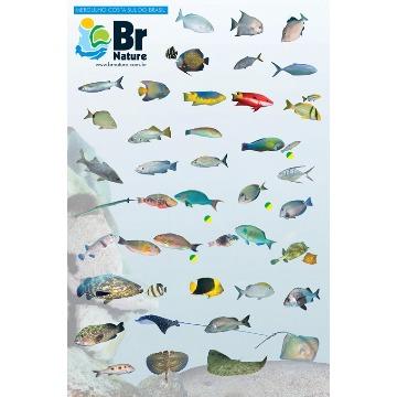 Guia de Identificação de Peixes Costa Sul do Brasil
