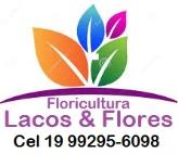 FLORICULTURA LACOS & FLORES