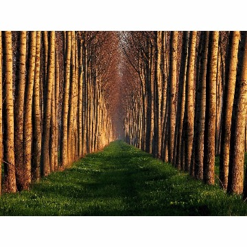 Skin Adesivo para Notebook Caminho de Árvores