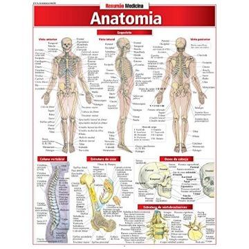 Anatomia - Coleção Resumão Medicina