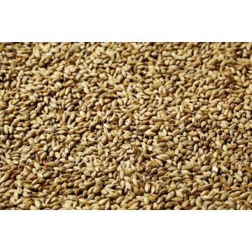 MALTE GOLD SWAEN HELL (CARAHELL) 500G