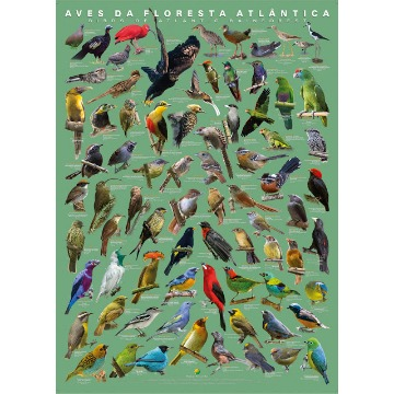 Pôster Aves da Floresta Atlântica - II