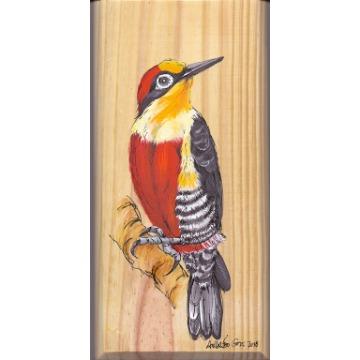 Benedito-de-testa-amarela - arte em madeira Bio & Mãe Terra